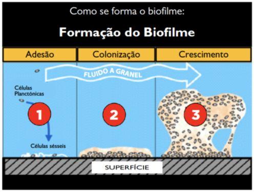 formacao-do-biofime